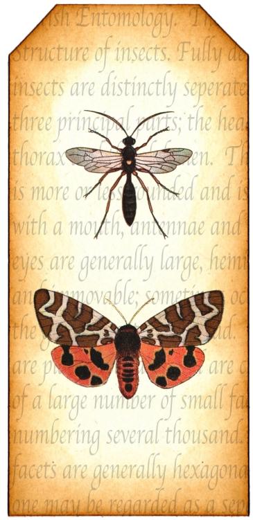 Entomology Tag 1