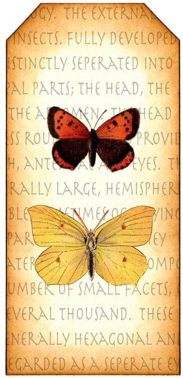 Entomology Tag 2